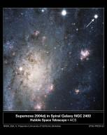 A Supernova in Nearby Galaxy NGC 2403