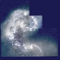 """Copyright: AURA [ http://www.aura-astronomy.org/ ] Explanation: Do star clusters form when galaxies collide? Quite possibly, according to Hubble Space Telescope [ http://antwrp.gsfc.nasa.gov/apod/ap970306.html ] observations of the """"Antennae [ http://wwwatnf.atnf.csiro.au/people/bkoribal/antennae.html ]"""", two galaxies thought to be in the early stages of a collision. As NGC 4038 and NGC 4039 [ http://crux.astr.ua.edu/gifimages/ngc4038.html ] slowly merge, the combined gravity of each pulls the other apart, huge gas clouds collide, and new bright stars and dark dust [ http://antwrp.gsfc.nasa.gov/apod/ap961119.html ] are dispersed. Many blue knots of stars appear to be newly formed globular clusters [ http://antwrp.gsfc.nasa.gov/apod/ap970214.html ]. Red star knots [ http://isowww.estec.esa.nl/activities/info/iso_pr96/ngc4038.html ] are particularly interesting, as they might be globular clusters [ http://www.limber.org/globs.html ] that have not yet expelled early dust from their system. The above picture [ http://archive.stsci.edu/cgi-bin/hst_proposal_search?proposal_id=304&action=search&show=data+abs ] is centered around the smaller of the two interacting galaxies: NGC 4039. The color contrast [ http://oposite.stsci.edu/pubinfo/LookLike/ ] in the above three-color mosaic was chosen to highlight extended features."""
